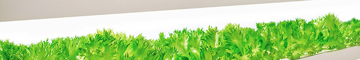 Plant growth (Horticulture) lighting guide with LEDs